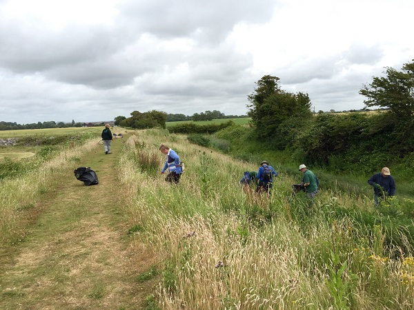 Ragwort pulling at Manor Farm Chidham - Photo by Paul Adams